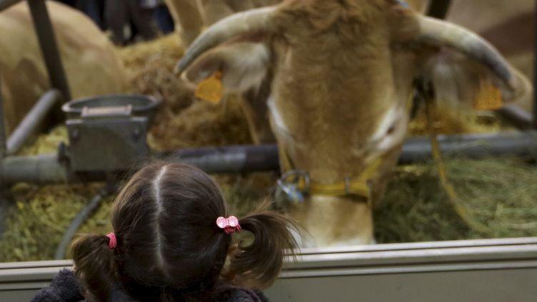 Une jeune fille regarde des vaches au premier jour du 50e Salon de l'agriculture, le 23 février 2013 à Paris. (PHILIPPE WOJAZER / REUTERS)