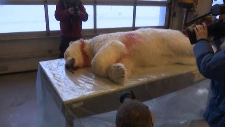 """Un """"chasseur d'éclipse"""" a été blessé par un ours polaire dans l'Arctique, jeudi 19 mars 2015. (APTN)"""