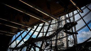Le squelette d'un dinosaure exposé au premier étage de la tour Eiffel, à Paris, le 2 juin 2018. (STEPHANE DE SAKUTIN / AFP)