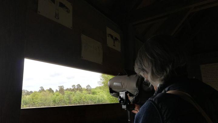 Marie-des-Neiges de Bellefroid, chargée de projets au sein de l'association Loiret Nature Environnement, sur le site de l'étang du Ravoir, le 10 mai 2019. (SARAH TUCHSCHERER / FRANCE-INFO)