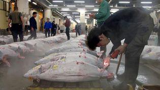 Le plus grand marché au thon du monde se trouve à Tokyo (Japon), dans le quartier de Tsukiji. On y tient des enchères dès 5 heures du matin. (MICHAEL CARONNA / MAXPPP)