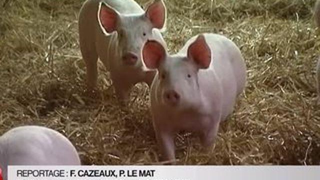 Filière porcine : Stéphane Le Foll répond à la colère des éleveurs
