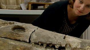 La conservatrice du musée de Brou veut conserver le crocodile  (France 3 / Culturebox)