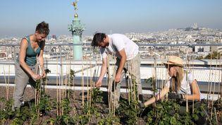 Un potager entretenu sur les toits de l'Opéra Bastille, en plein centre de Paris. (DELPHINE GOLDSZTEJN / MAXPPP)