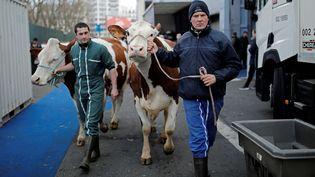Des éleveurs préparent le Salon de l'agriculture, le 24 février 2017, à Paris. (BENOIT TESSIER / REUTERS)