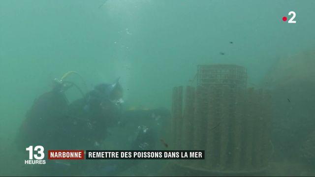 Narbonne : une dispositif sous-marin pour sauver la faune aquatique