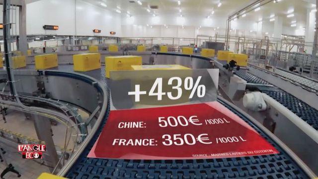 """VIDEO. """"L'Angle éco"""". La vache normande préfère les Chinois aux Français"""