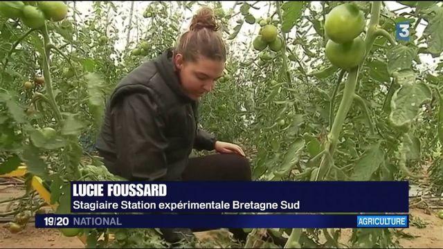 Agriculture : les robots des champs