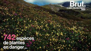 VIDEO. En France, des plantes sauvages disparaissent (BRUT)