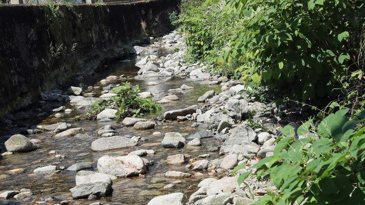 La Thur presque à sec dans le village de Wildenstein (Haut-Rhin), le 2 août 2018. (MAXPPP)