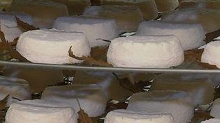Le Mothais sur feuille est un fromage français au lait de chèvre qui pourrait prochainement bénéficier d'une Appellation d'Origine Protégée. Reportage à Villemain, dans les Deux-Sèvres. (FRANCE 2)