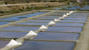 Les marais salants de la commune de Loix sur l'Île de Ré. (PHILIPPE ROY / PHILIPPE ROY)