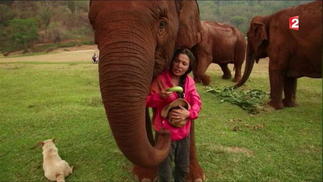 Thaïlande : une femme tente de sauver les éléphants maltraités pour le tourisme