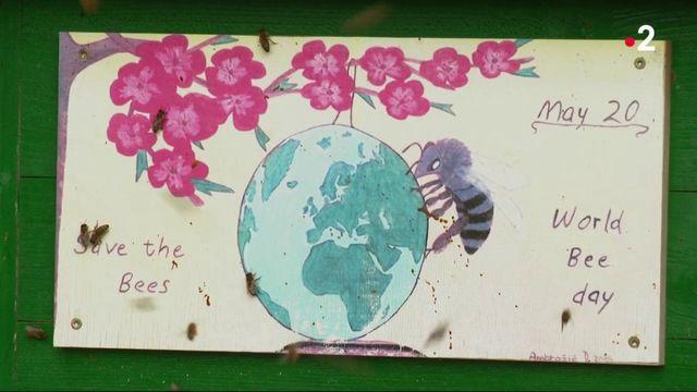 Environnement : zoom sur la Slovénie, royaume des abeilles