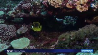 Expédition Tara : les coraux souffrent de l'activité humaine (FRANCE 3)