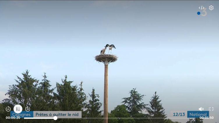 Des cigognes. (FRANCE 3)