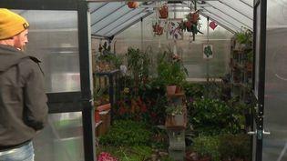 La Société protectrice des végétaux a été créée par Nicolas Talliu à Lyon (Rhône) pour tenter de redonner une seconde vie aux plantes dontpersonneneveut.  (Capture d'écran / France 3)