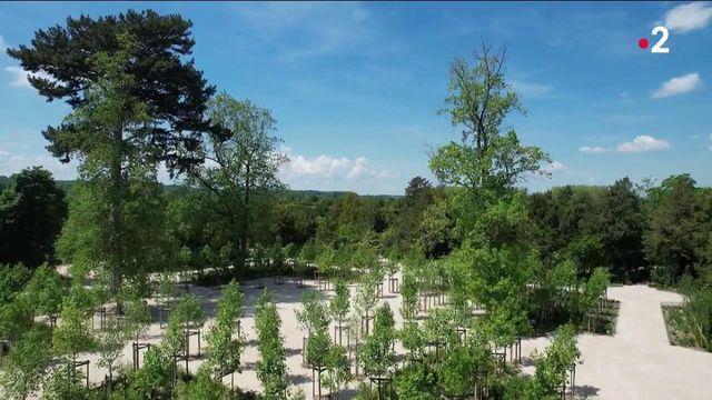 Versailles : le nouveau visage du bosquet de la Reine