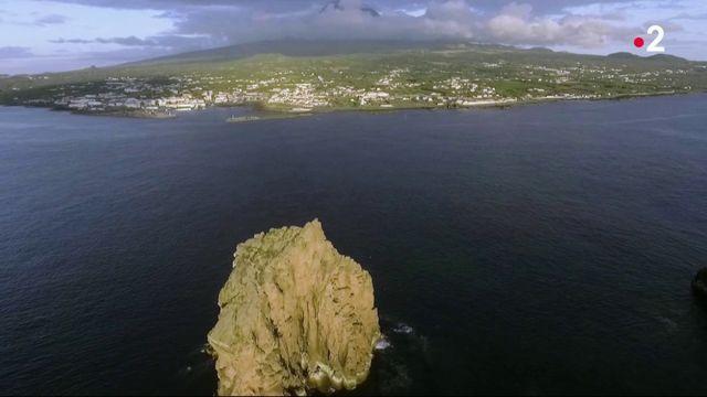 Açores : des vignes cultivées dans la roche volcanique