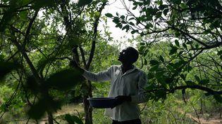 A Mhondoro au Zimbabwe,Earnmore Chikavazaattrapedes hannetons pour les cuisiner, le 16 décembre 2020. (JEKESAI NJIKIZANA / AFP)
