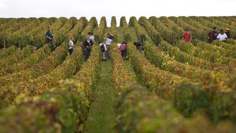 (Vendanges à Pessac-Léognan. © Patrick Durand/Getty Images)