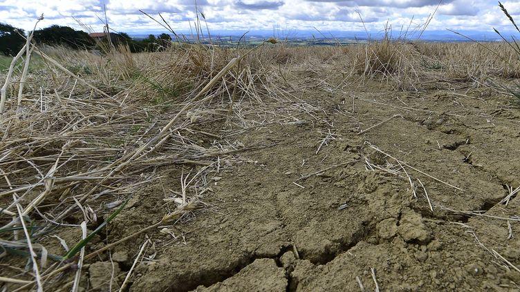 Les fortes chaleurs viennent s'ajouter à un épisode de sécheresse. Photo d'illustration. (GEORGES GOBET / AFP)