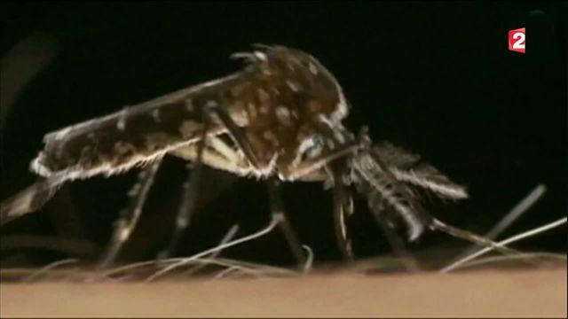 Virus Zika : un lien avec le syndrome de Guillain-Barré