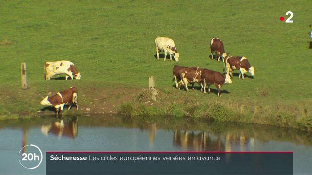 Sécheresse : les aides européennes versées aux agriculteurs, mais pas de prime exceptionnelle