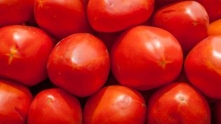 Tomate  (WILFREDO R. RODRIGUEZ H.)
