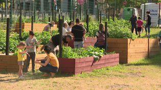 Les habitants du quartier de Châteaucreux s'essayent au jardinage dans le potager partagé de La Ferme en Chantier. (France 3 Saint-Etienne)