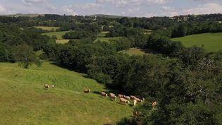 Aveyron :à la découverte du plateau de l'Aubrac (France 2)