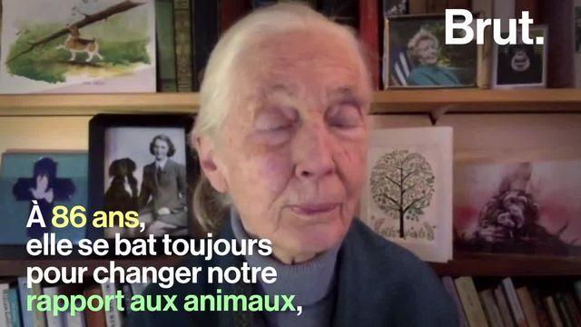 Jane Goodall a consacré toute sa vie à l'observation des chimpanzés. Et voici comment son travail a changé la façon dont l'homme voit les animaux.