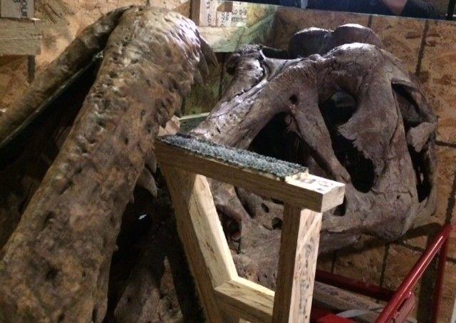 Le crâne du tyrannosaure dans sa caisse  (Valérie Gaget/France 2)