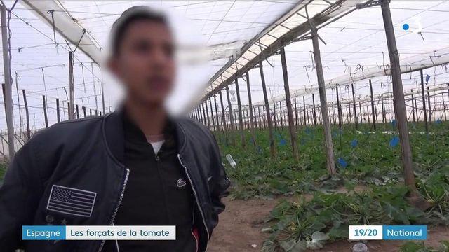 Travail : en Espagne, auprès les forçats de la tomate