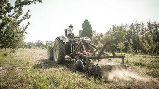 Un agriculteur bio passe une herse avec son tracteur sur un champ de son exploitation à Avignon (Vaucluse), le 15 septembre 2020. (SANDRINE MULAS / HANS LUCAS / AFP)