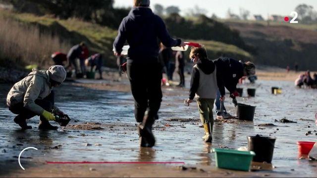 Pollution : des billes de plastique s'échouent sur les plages bretonnes