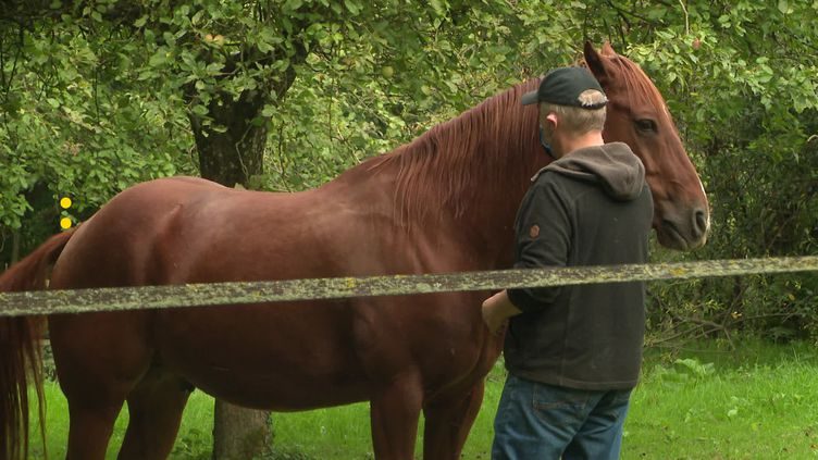 Normandie: Un groupe Facebook organise la surveillance des chevaux (Surveillance Chevaux)