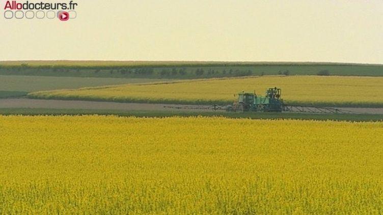 Les pesticides seraient responsables de 2% des maladies professionnelles déclarées chez les agriculteurs