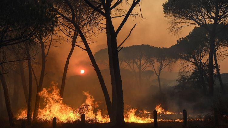 A Gonfaron (Var), le 17 août 2021. (NICOLAS TUCAT / AFP)
