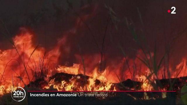 Incendies en Amazonie : un triste record