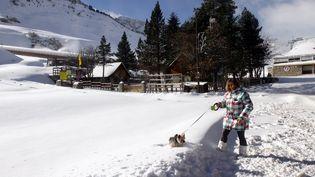 A vue d'oeil, ce chien s'enfonce dans plusieurs dizaines de centimètres de neige à la Mongie, dans les Hautes-Pyrénées, près du Tour Malet, le 22 novembre 2015. (LAURENT DARD / MAXPPP)