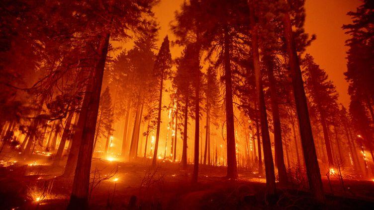L'incendie Caldor Fire ravage Sly Park, en Califonie, le 17 août 2021. (ETHAN SWOPE / AP)
