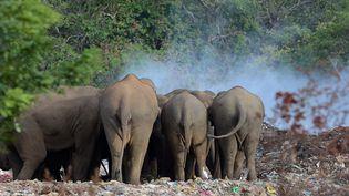 L'arrivée du premier éléphant, à Saint-Nicolas Courbefy (Haute-Vienne) est prévue pour 2018. (Photo d'illustration) (LAKRUWAN WANNIARACHCHI / AFP)