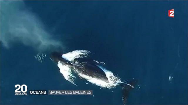 Océans : sauver les baleines