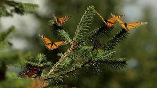 Mexique : à la découverte d'un endroit où les papillons sont rois (Capture d'écran France 2)