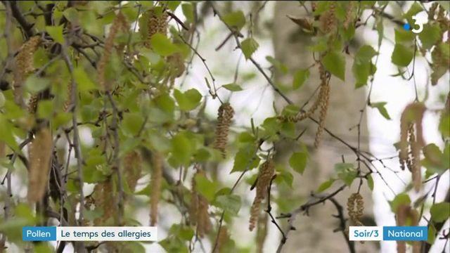 Avec le beau temps, les pollens et les allergies arrivent