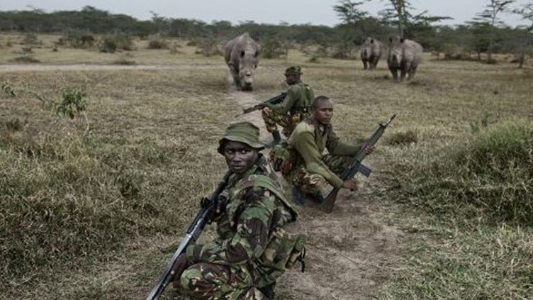 Image du film «The last Animals». Les derniers rhinocéros blancs sont protégés par les rangers kenyans, une espèce en voie d'extinction. (Image tiré du film de Kate Brooks «The last Animals»)