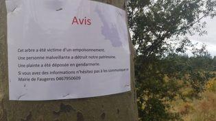 Un appel à témoins lancé par la mairie de Faugères pour faire avancer l'enquête de gendarmerie.       (STEFANE POCHER / RADIO FRANCE)
