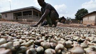 Un agriculteur sèche des noix de cajou à Bouaké, en Côte d'Ivoire, le plus important producteur au monde. (SIA-KAMBOU / AFP)