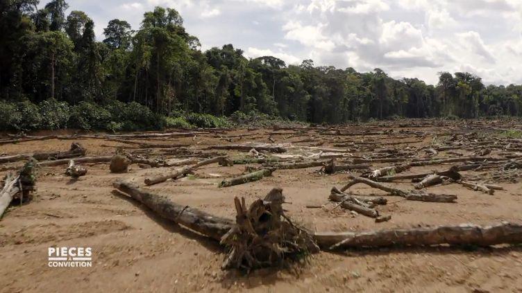"""Déforestation : 27 000 hectares de l'Amazonie française ont déjà été détruits par l'exploitation minière (CAPTURE D'ÉCRAN """"PIÈCES A CONVICTION"""" / FRANCE 3)"""